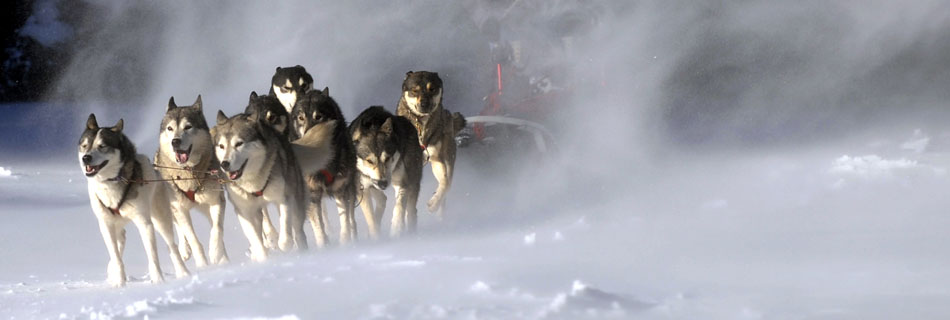Wecome to rmsdc welcome to the rocky mountain sled dog club publicscrutiny Choice Image